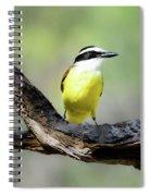 Beautifully Colored Great Kiskadee  Spiral Notebook