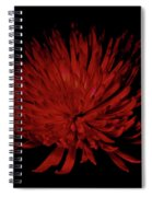 Beauty 2 Spiral Notebook