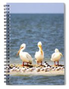 Beauty - 8831-001 Spiral Notebook