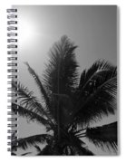 Beauty And The Palms In  Dominican Republic  Spiral Notebook