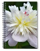 Beauty Can't Be Dampened - Festiva Maxima Double Peony Spiral Notebook