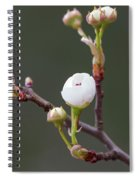 Beauty In The Emerging Spiral Notebook