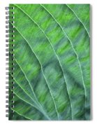 Beauty In The Shadows Spiral Notebook