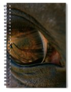 Beauty Is In The Eye Of The Beholder Spiral Notebook