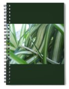 Beauty Is Within Lines Spiral Notebook