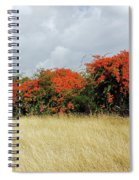 Beauty Of Bougainvillea Spiral Notebook