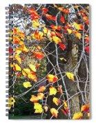Beauty Of Fall Spiral Notebook