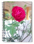 Beauty Of  Red Rose  Spiral Notebook