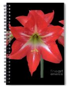 Beauty Of The Amaryllis Spiral Notebook
