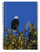 Beauty Of The Bald Eagle Spiral Notebook