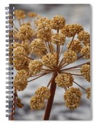Beauty Of The Seeds Spiral Notebook