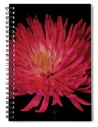 Beauty Spiral Notebook