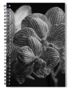 Beauty Up Close 4 Bw Spiral Notebook