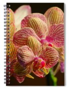 Beauty Up Close 4 Spiral Notebook