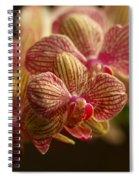 Beauty Up Close 6 Spiral Notebook