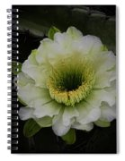 Beauty Within Spiral Notebook
