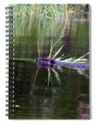 Beaver Carrying A Reed Spiral Notebook