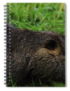 Beaver Whiskers Spiral Notebook