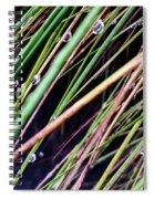 Bedazzled Blades 4 Spiral Notebook