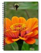 Bee Above Orange Zinnia Spiral Notebook