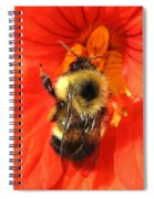 Bee And Nasturtium Spiral Notebook