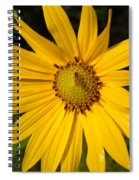 Bee And Yellow Flower Spiral Notebook