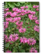 Bee Balm Beauties Spiral Notebook