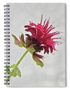 Bee Balm Spiral Notebook