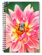 Bee In The Center Spiral Notebook