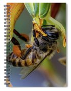 Bee Life Spiral Notebook