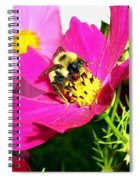 Bee-line 3 Spiral Notebook