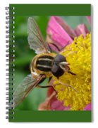 Bee Spiral Notebook