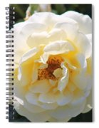 Bee My Rose Spiral Notebook