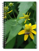 Bee On A Flower Spiral Notebook