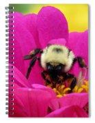 Bee On A Hot Pink Zinnia Spiral Notebook