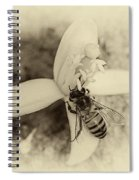 Bee On Citrus Flower Spiral Notebook