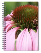 Bee On Echinacea Spiral Notebook