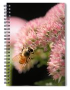 Bee On Flower 3 Spiral Notebook