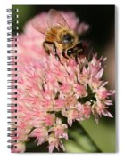 Bee On Flower 4 Spiral Notebook