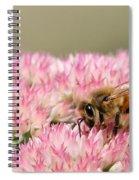 Bee On Flower 5 Spiral Notebook