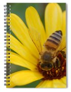 Bee On Flower Spiral Notebook