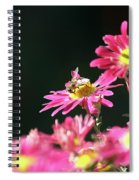 Bee On Flower Spring Scene Spiral Notebook