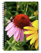 Bee On The Cone Flower Spiral Notebook