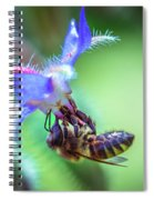 Bee On The Flower Spiral Notebook