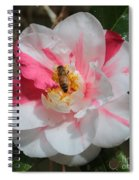 Bee On White And Pink Camellia Spiral Notebook