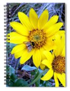 Bee On Wild Sunflowers Spiral Notebook