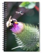 Bee Pollination Spiral Notebook