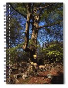 Beech Trees Coming Into Leaf  In Spring Padley Wood Padley Gorge Grindleford Derbyshire England Spiral Notebook