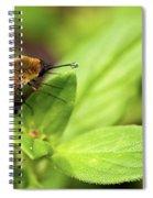 Beefly Spiral Notebook