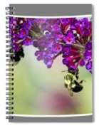 Bees On Butterfly Bush Framed Spiral Notebook